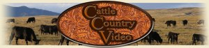 country_cattle_header